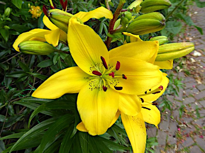 Foto van gele bloem