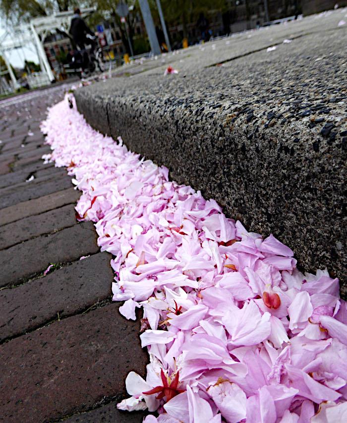 Foto van gevallen bloesem langs stoeprand