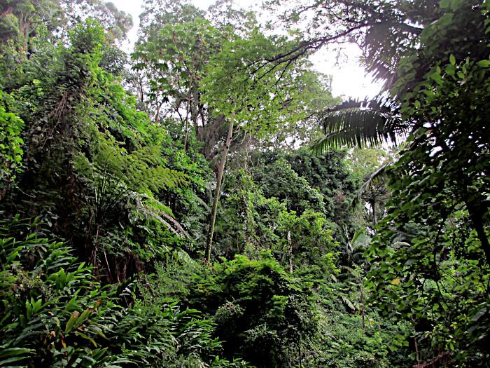 Foto van stukje atlantisch woud
