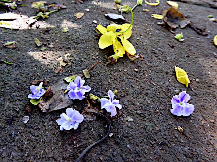 Foto van blauwe en gele bloemetjes op asfalt