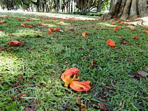 Foto van oranje bloemen op de grond