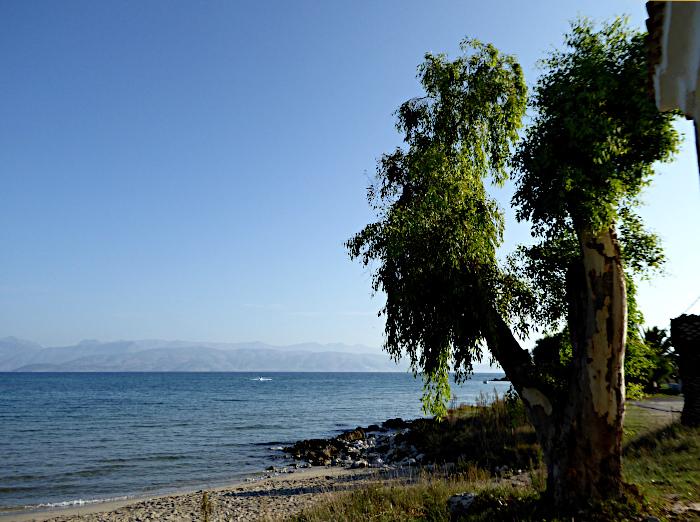 Foto van boom aan strand