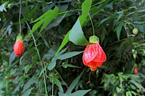 Foto van hangende bloemetjes