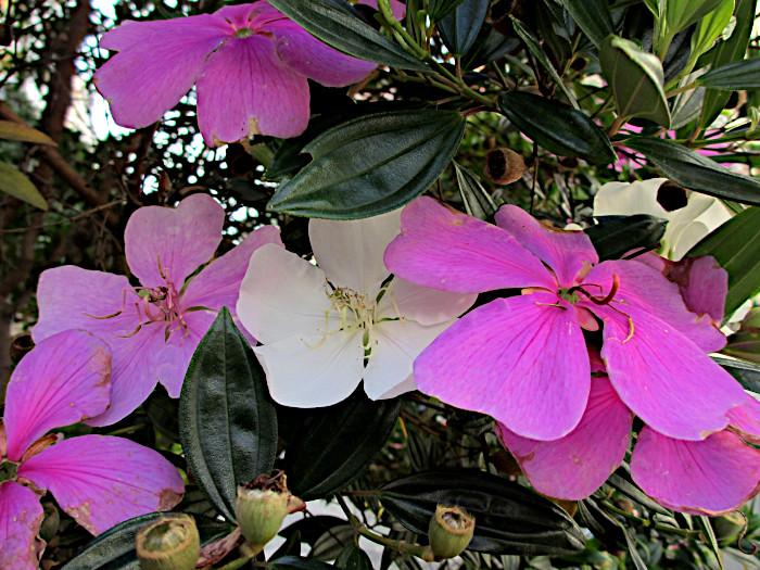 Foto van bloemtejes in twee kleuren