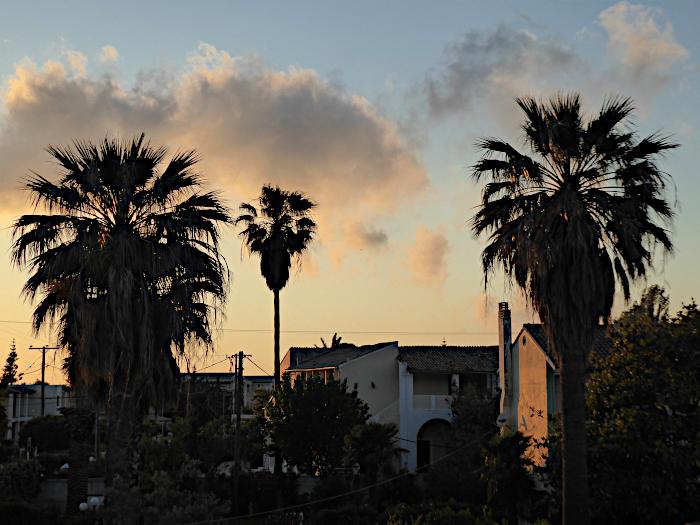 Foto van palmen en wolken bij avond