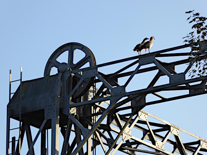 Foto van nijlganzen boven op hefbrug