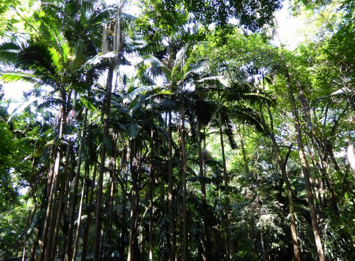 Foto van palmbomen