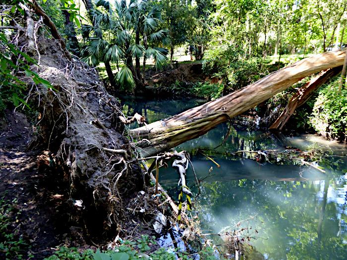 Foto van omgevallen boom over sloot