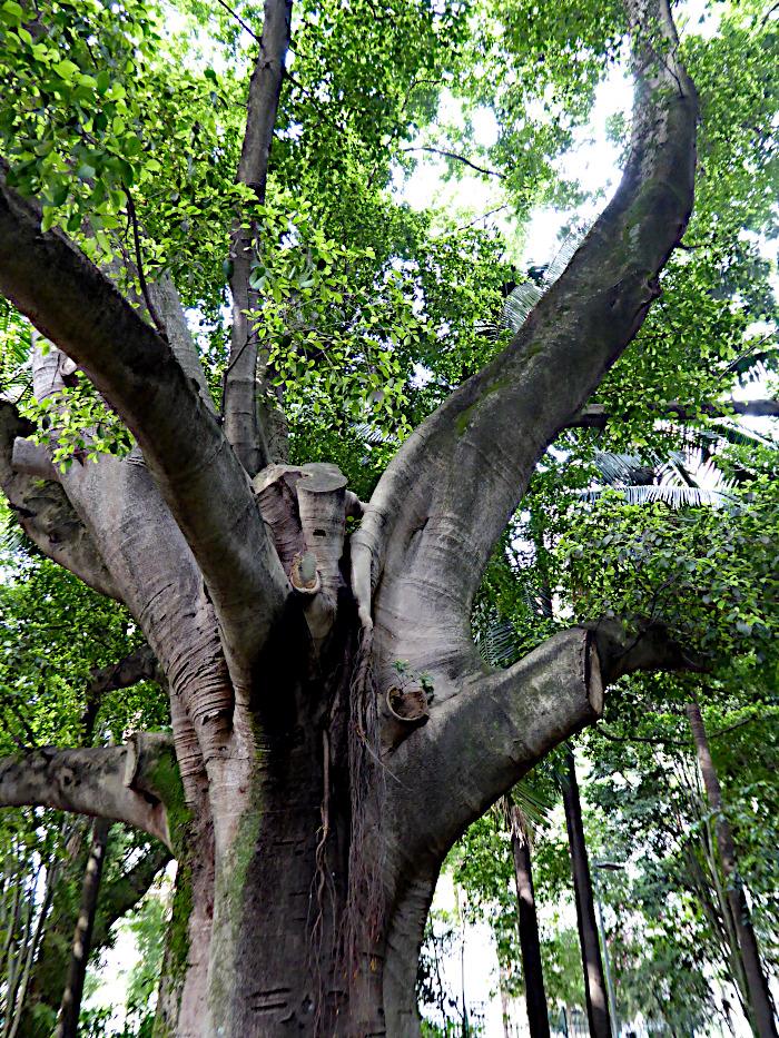 Foto van deel van stevige boomstam