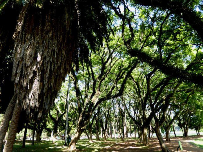Foto van bomen met grillige takken