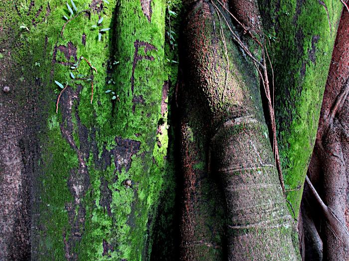 Foto van deel boom
