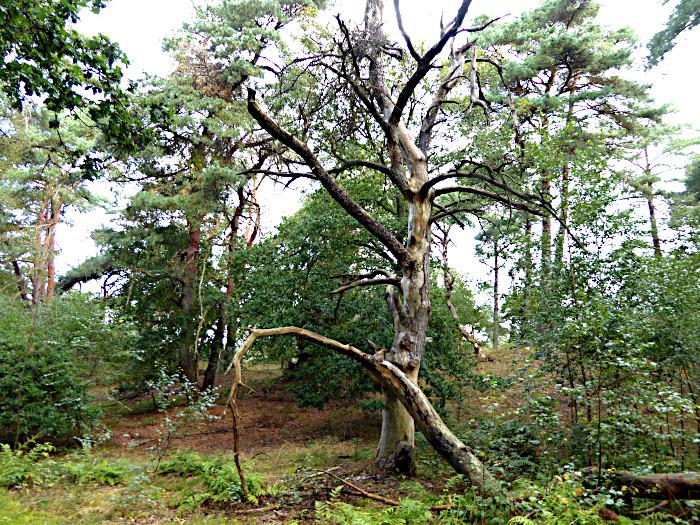 Foto van dode boom tussen groen