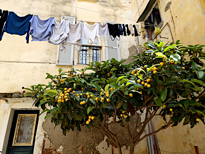 Foto van waslijn boven mispelboom