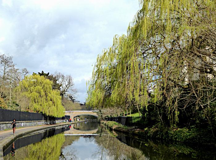 Foto van kanaal tussen bomen