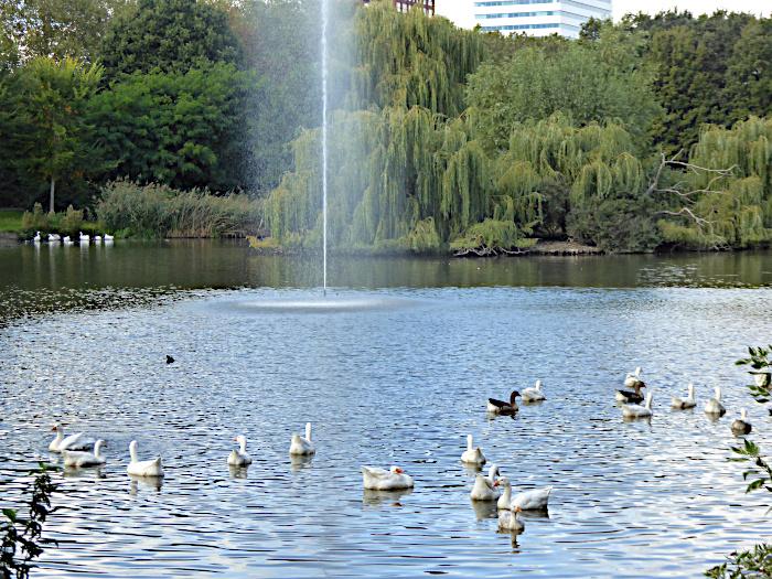 Foto van vijver met fontein en ganzen