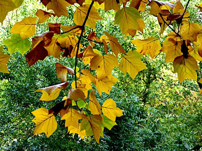 Foto van vergelende bladeren