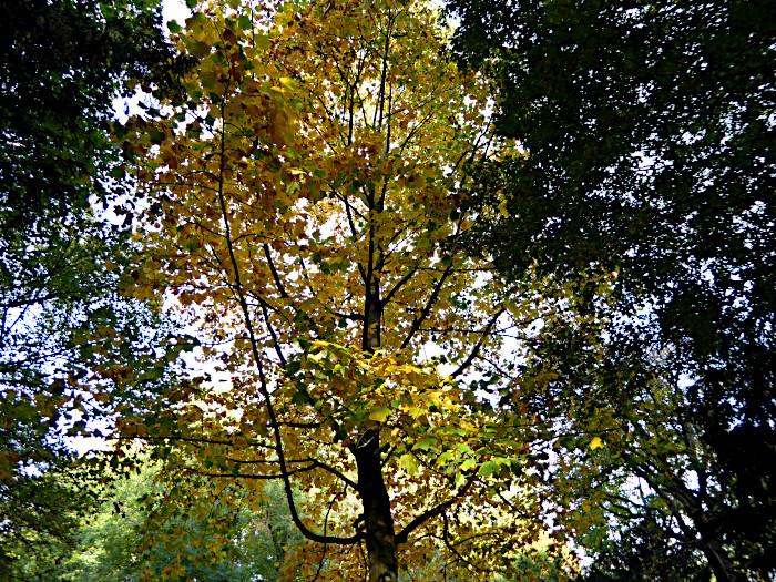 Foto van verkleurende boom