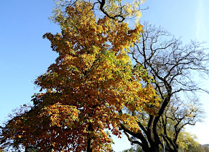 Foto van geel wordende boom