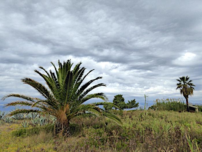 Foto van palmen onder wolkenlucht