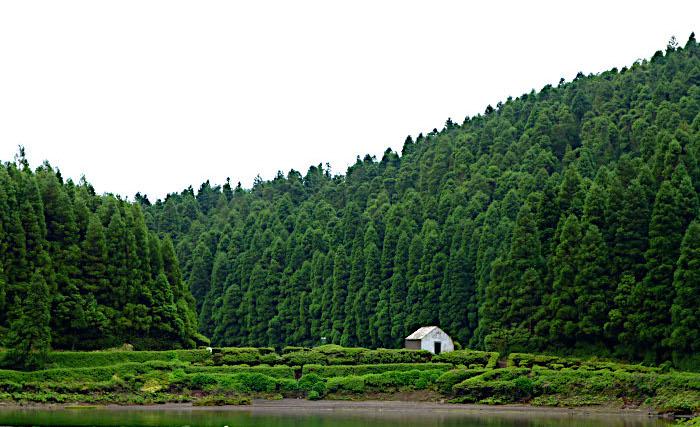 Foto van schuurtje aan oever van meer met bomen in achtergrond