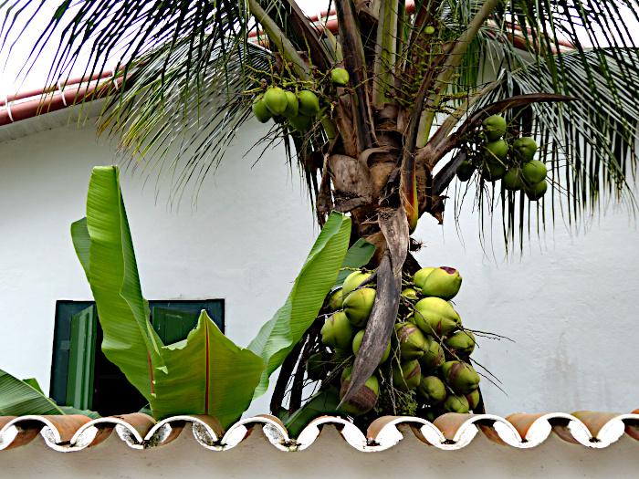 Foto van kokospalm achter muur