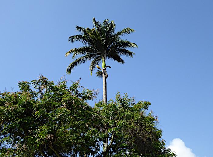 Foto van bomen waar een palmboom bovenuit steekt