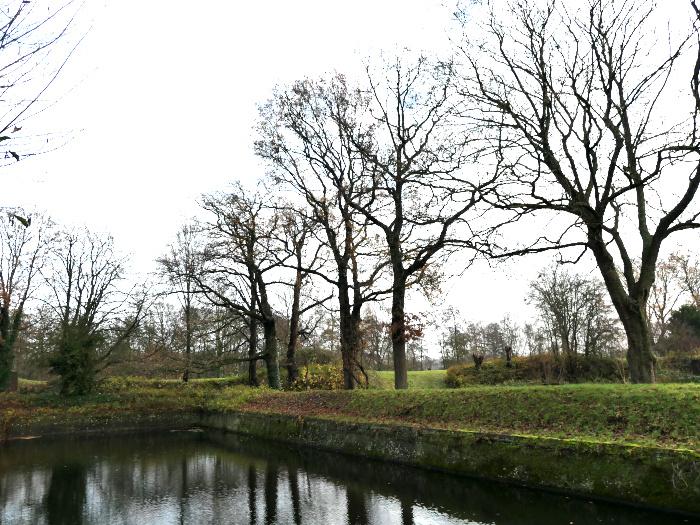 Foto van kale bomen aan water