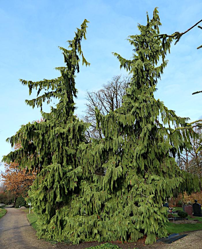 Foto van naaldbomen