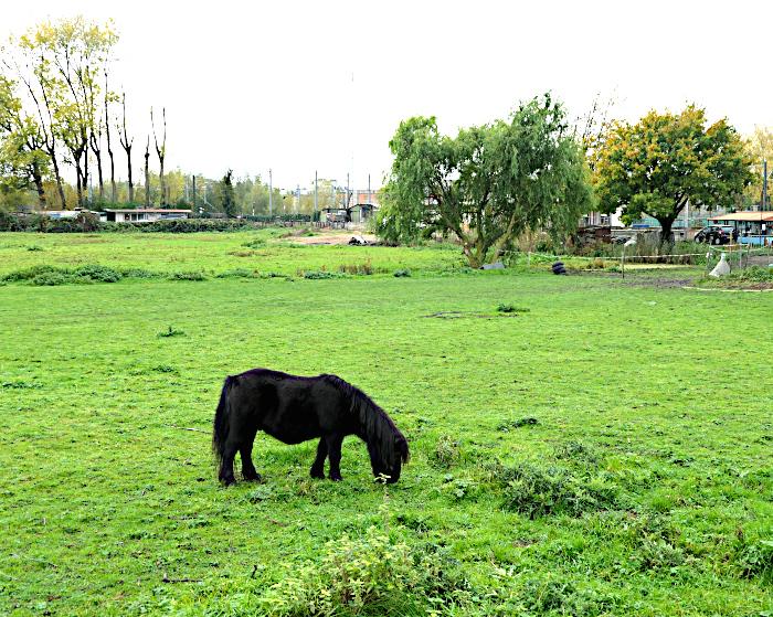 Foto van pony in weiland met bomen