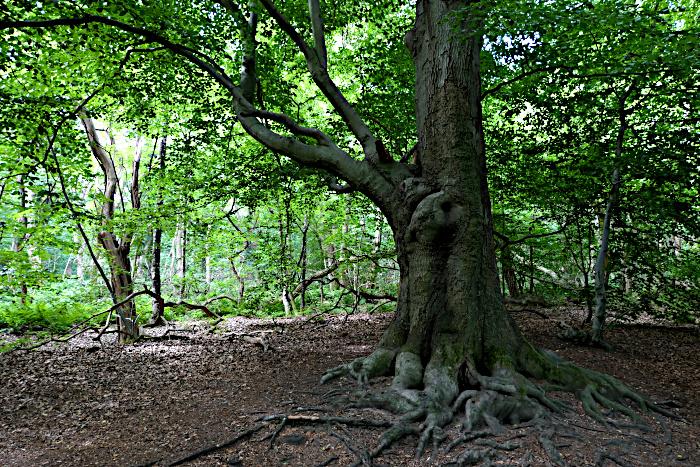 Foto van boom in bos