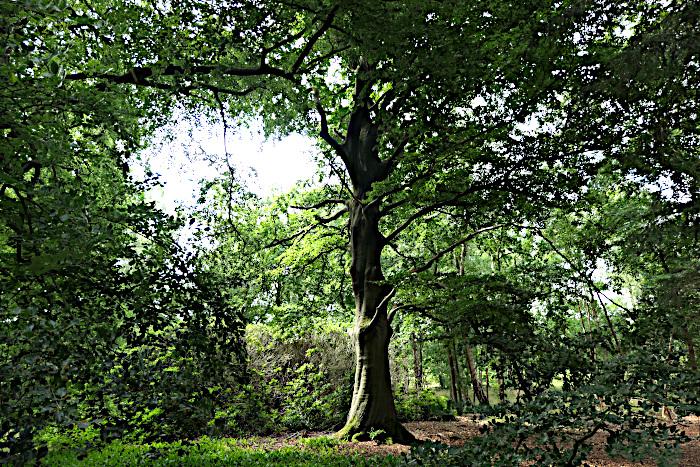 Foto van bos met grote boom in het midden
