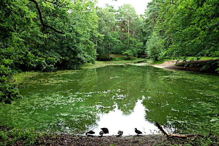 Foto van vijver met eenden