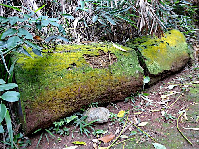 Foto van omgezaagde boomstam met mos