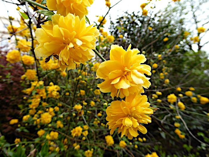Foto van gele bloemen