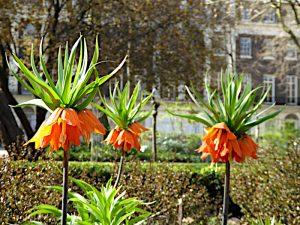Foto van planten met oranje bloemen