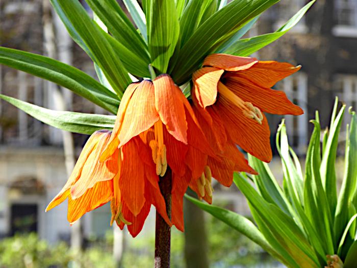 Foto van oranje bloemen