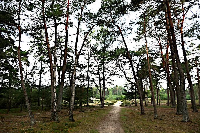 Foto van pad dat bos uitloopt