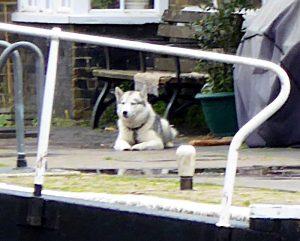 Foto van hond bij sluis