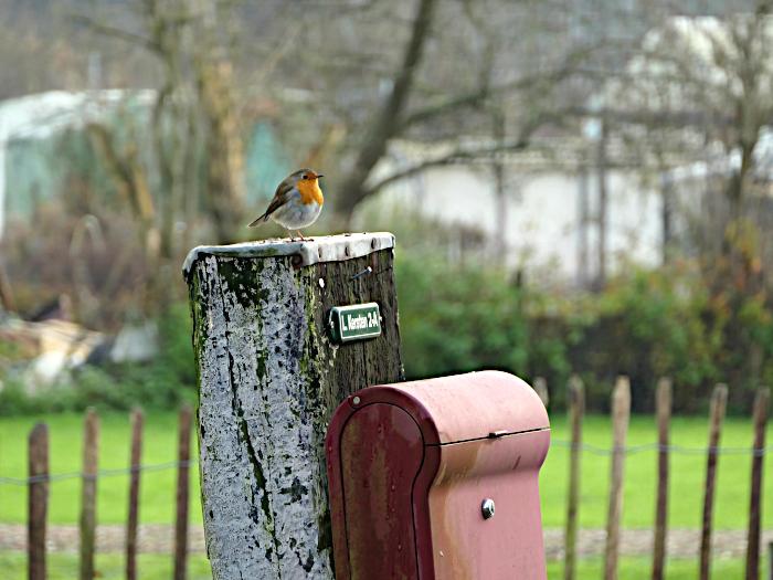Foto van roodborstje op paal van brievenbus