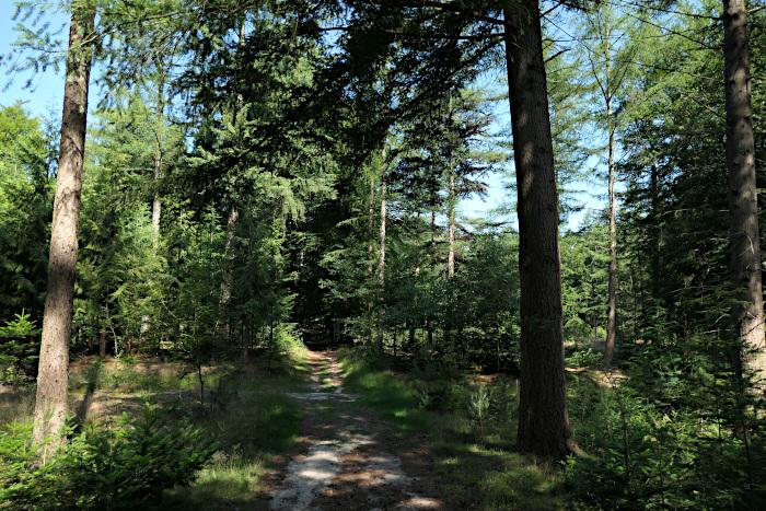 Foto van pad door bos