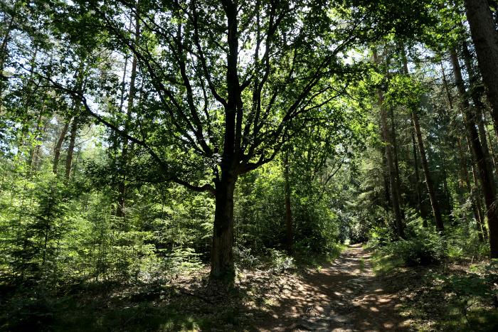Foto van weggetje door bos