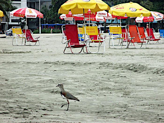 Foto van kievit op strand met parasols en klapstoelen