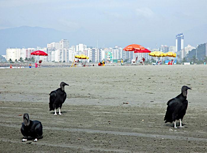 Foto van strand met parasols en gieren