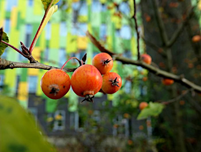 Foto van oranje besjes