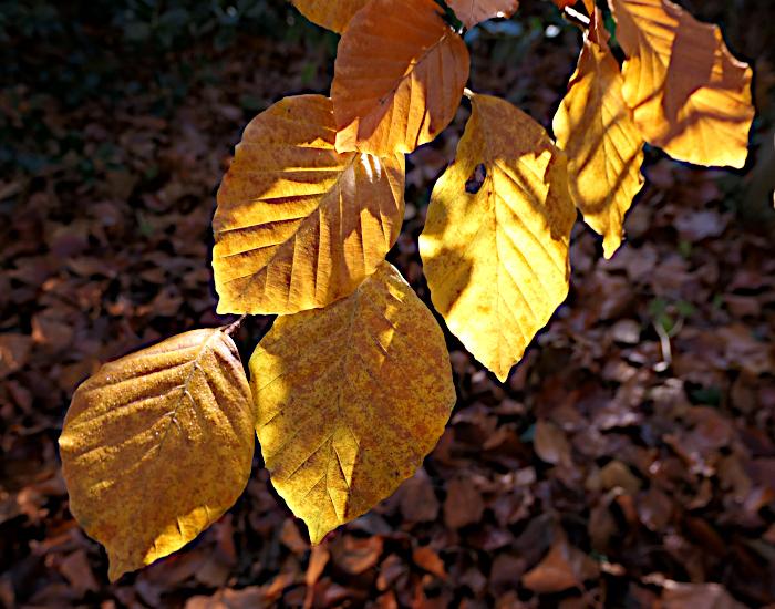Foto van geel blad waar zon door schijnt