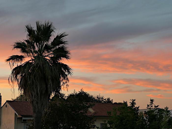 Foto van palmboom en rood kleurende wolken