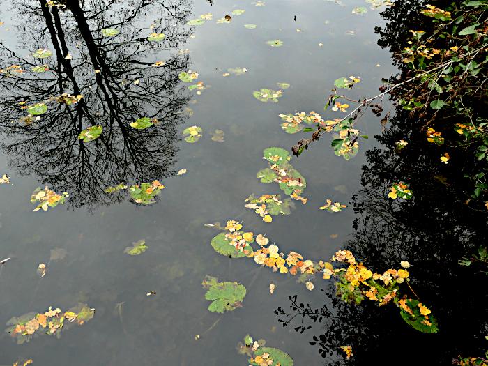 Foto van water met herfstblad en spiegeling boom